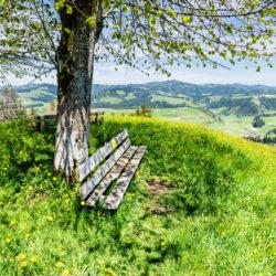 Frühlingsferien am BZZ schönes Aussicht auf die Landschaft mit Bank im Vordergrund